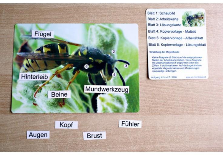 Insekten - Kindergarten - Alter