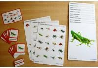 Schiebe- und Aufdeckspieleinlagen - Insekten