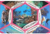 Lebensraumstern Korallenriff